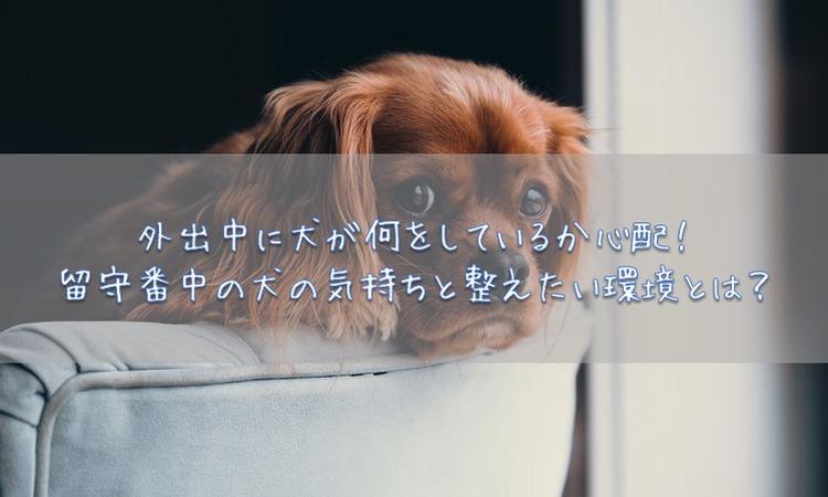 外出中に犬が何をしているか心配!留守番中の犬の気持ちと整えたい環境とは